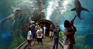 Philadelphia attractions Adventure Aquarium