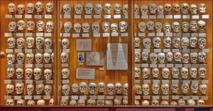 Philadelphia attractions Mutter Museum